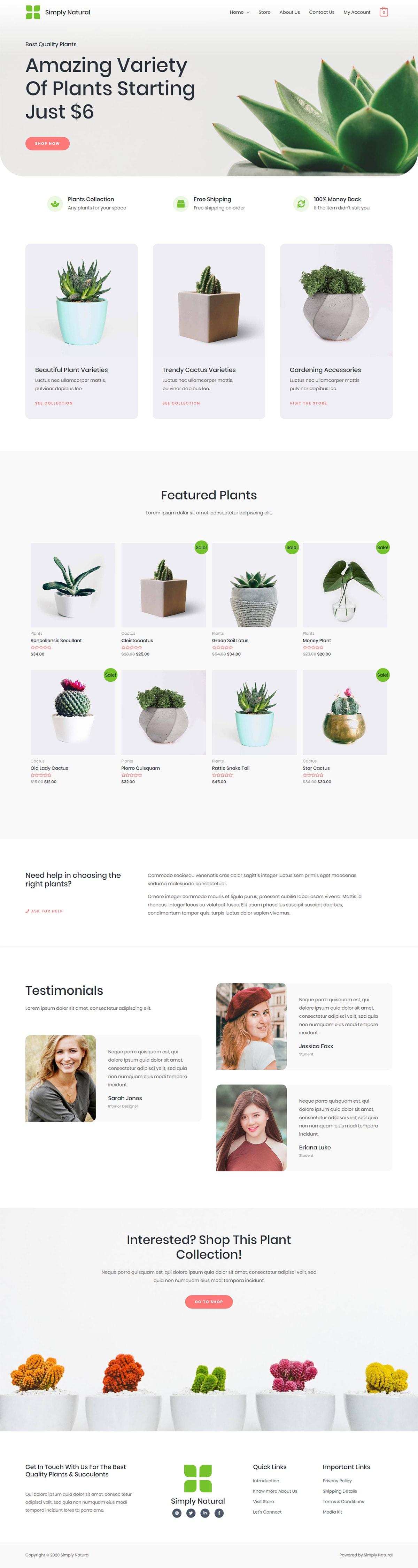 Готовый интернет-магазин комнатных растений. Создание сайтов в Костроме