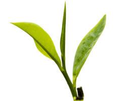 Сайт сети чайных магазинов Чай, кофе, сладости и др.